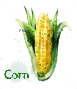 Corn icon watercolor Vector. Delicious maize template icon - starpik
