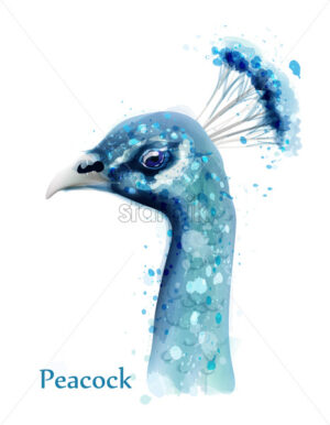 Peacock watercolor Vector card. Blue birds isolated on white background - starpik