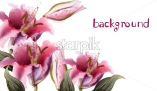 Pink lily flowers Vector watercolor. Summer floral background - starpik