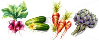 Radish, cucumber, carrots and artichoke Vegetables Vector watercolor isolated on white - starpik