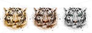 Tigers vector watercolor. Wildlife annimals collection illustration - starpik