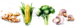 Vegetables watercolor Vector set collection. Mushrooms, corn, brocoli and ginger - starpik