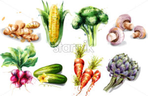 Vegetables watercolor Vector set collection. Mushrooms, corn, radish and artichoke - starpik