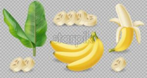 Banana fruits isolated on transparent Vector realistic poster template. Mock up for label design - starpik
