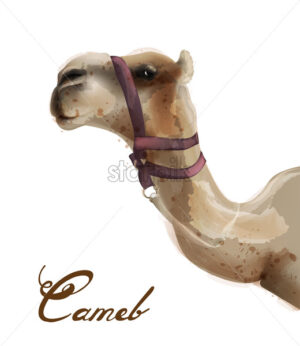 Camel Vector watercolor. Cute animal isolated on white background - starpik