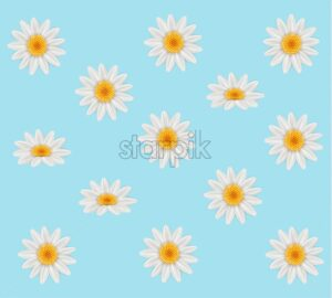Chamomile Vector. Summer frame background card illustration - starpik