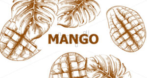 Mango vector line art. Tropic fruit summer pattern. Vintage style - starpik