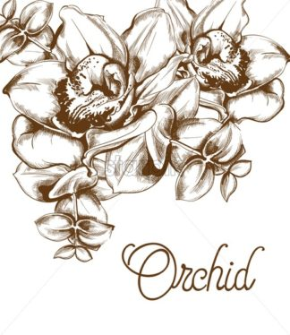 Orchid flowers and line art Vector. Old effect bouquet decor. wedding card elements. save the date - starpik