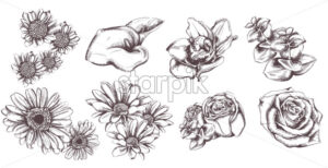 Vintage flowers set collection line art Vector. Sunflower, roses and lily illustration - starpik