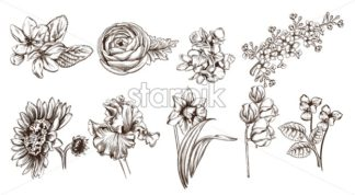 Vintage flowers set line art Vector. Sunflower, roses and narcisus illustration - starpik
