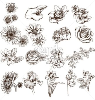 Vintage flowers set line art Vector. Sunflower, roses and narcisus illustrations - starpik