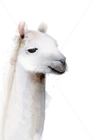 Lama Vector watercolor isolated on white. Painted style illustration - starpik