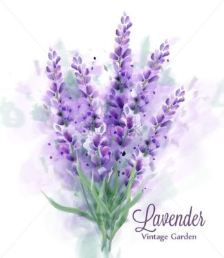 Lavender bouquet watercolor Vector. Delicate floral decor. Spring summer banner template - starpik