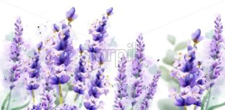 Lavender watercolor background Vector. Delicate floral bouquet on white background. Spring summer banner template - starpik