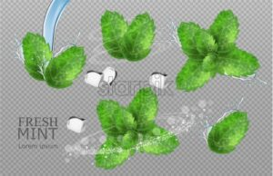 Mint leaves Vector realistic. Product placement detailed label design. Mint flavor. 3d illustration - starpik