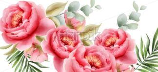 Pink peonies vector watercolor. Summer exotic floral background - starpik