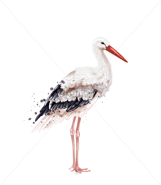 Stork Vector watercolor isolated on white. Icon Painted style illustration - starpik