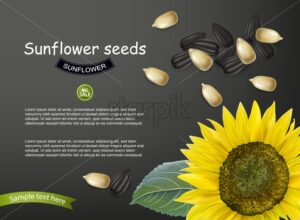 Sunflower seeds Vector realistic. Darkl background. 3d illustration - starpik