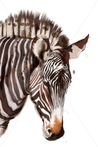 Zebra Vector watercolor isolated on white. Painted style illustration - starpik