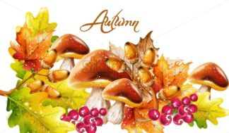 Autumn fall vegetables Vector watercolor. harvest forest mushrooms illustration - starpik