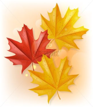 Autumn leaves Vector realistic isolated. Fall background decor - starpik