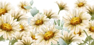 Daisy flowers background Vector watercolor. Summer decor floral bouquets poster banner - starpik