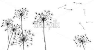 Dandelion flowers Vector line art. Floral ink texture summer decor background - starpik