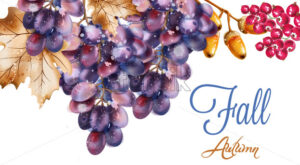 Grapes vector watercolor. Autumn fall harvest background - starpik