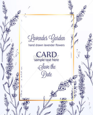 Lavender card Vector vintage line art. Provence floral decor hand drawn. Summer wedding ceremony delicate poster - starpik
