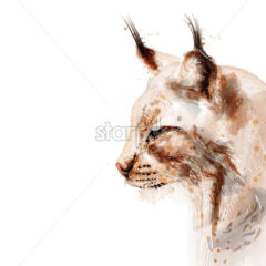 Lynx vector watercolor isolated on white background. Animal lovely portrait - starpik