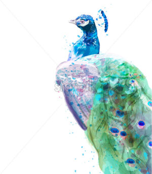 Peacock isolated Vector watercolor. Summer exotic birds decor - starpik