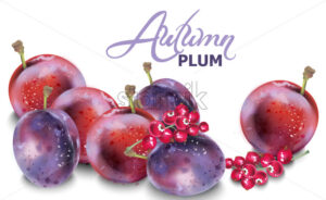 Plums vector watercolor. Autumn fall harvest background - starpik