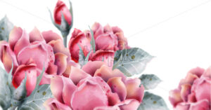 Roses flowers Vector watercolor Delicate floral decor background - starpik