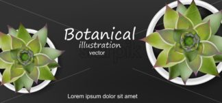 Succulents botanical card Vector realistic. Green cactus plants. dark background - starpik