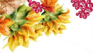 Sunflowers card Vector watercolor. Autumn fall floral decor - starpik