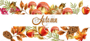 Autumn harvest banner Vector. Fall muchrooms and fruits decor poster - starpik