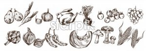 Autumn veggies set collection Vector line art. Artichoke, pumpkin, corn, tomatoes fall fresh harvest - starpik