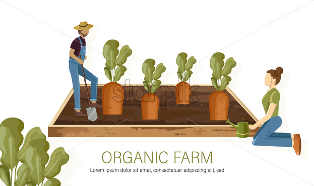 Farmers carrot harvest growing eco products Vector flat style. Woman and man working in the field harvesting and growing eco products illustration - starpik
