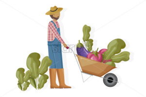 Man harvesting and transporting eggplant and beet Vector flat style. Farmer collecting harvest with a wheelbarrow - starpik