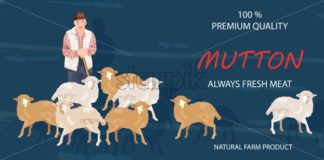 Old farmer and sheep Vector banner. Mutton products organic agriculture - starpik