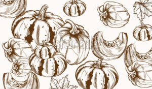 Pumpkin pattern line art Vector. Autumn fall harvest decor - starpik