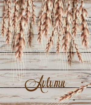 Wheat ears Autumn fall card. Vintage rustic poster. Wooden texture background - starpik