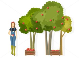Woman farmer collecting apple harvest Vector. Fall season template harvesting layout project - starpik