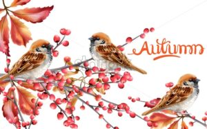 Autumn birds sitting on red berries branch vector. Isolated background - Starpik Stock