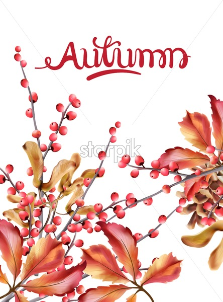 Autumn wild berries card vector watercolor. Isolated background. Provence flowers banner - Starpik Stock