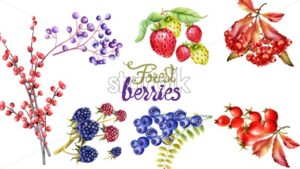 Autumn wild forest berries and flowers wreath bouquet vector - Starpik Stock