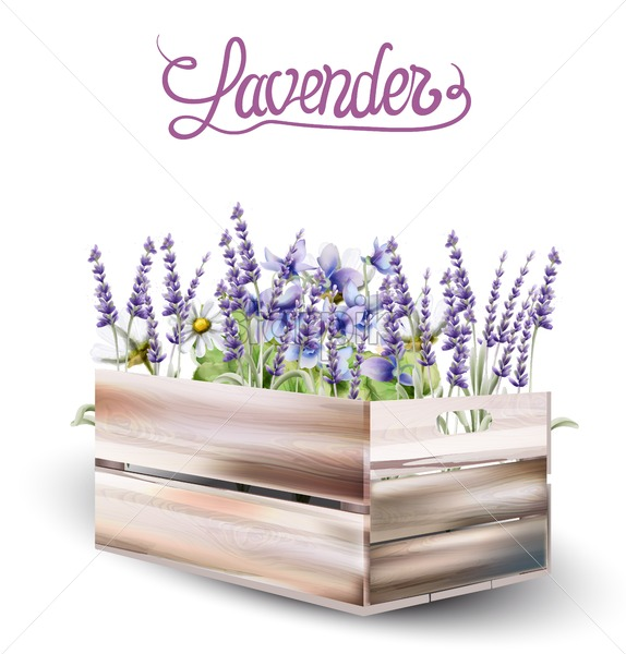 Lavender in wooden box card vector watercolor. Isolated background. Provence flowers banner - Starpik Stock