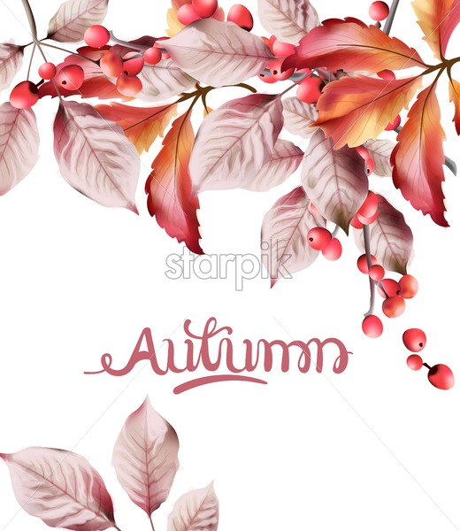 Watercolor autumn leaves and red berries bouquet background vector - Starpik Stock