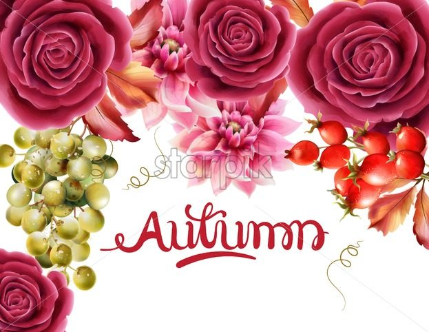 Watercolor rose flowers, grapes, berries and autumn leaves greeting card vector. Floral bouquet decor - Starpik Stock