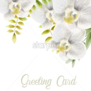 Watercolor white orchid flowers greeting card vector. Background bouquet - Starpik Stock